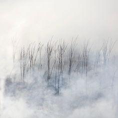 The Burn - a Photography Series by Jane Fulton Alt Landscape Drawings, Watercolor Landscape, Abstract Landscape, Misty Forest, Magic Forest, Photography Series, Creative Photography, Fine Art Photo, Photo Art