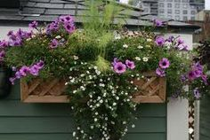 45 Beautiful Shade Plants For Window Boxes Ideas For Your Home - LuvlyDecor Window Box Plants, Window Box Flowers, Balcony Flowers, Balcony Plants, Roof Window, Outdoor Flowers, Window Boxes, Flower Boxes, Flower Containers