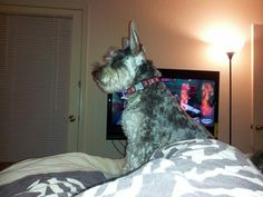He in my bed