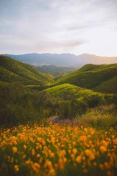 Super bloom in California. [oc] – Photography, Landscape photography, Photography tips Beautiful World, Beautiful Places, Beautiful Scenery, Landscape Photography, Nature Photography, Travel Photography, Nature Aesthetic, All Nature, Adventure Is Out There