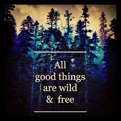 young & wild & free Jung Wild Frei, Motto, Free Spirit Tattoo, Wild And Free Quotes, Free Indeed, Tarot Card Spreads, Wild Tattoo, Message Quotes, Quotes