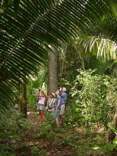 #Birdwatching near the #LamanaiOutpostLodge in northern #Belize
