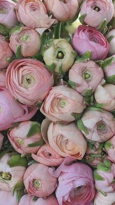 Flowers Near Me | Bulk Flowers | Wedding Flowers | Order Flowers Online Wholesale Flowers Online, Bulk Flowers Online, Where To Buy Flowers, Diy Wedding, Wedding Events, Wedding Bouquets, Wedding Flowers, Flowers Direct, Red And Yellow Roses