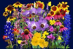 Texas Hill Bluebonnet Tour   Texas Wildflower Bouquet fine art print, bluebonnets, paintbrush ...MY HOME WINDOW SILL FLOWER BOX