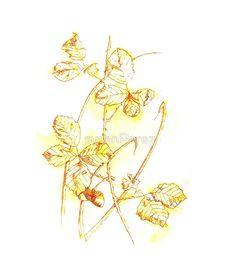 Acorns Framed Prints, Canvas Prints, Art Prints, Duvet Covers, Animal Drawings, Acorn, Watercolor, Ink, Wall