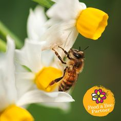 How would you help Feed a Bee? Check out the 50 ways the #FeedABee partners supported #beehealth this year. #beehealth #pollinators #flowers #bees