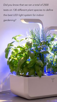 The lights consist of blue and white LEDs, known for their light intensity, precision and efficiency. Each blue wavelength guarantees a faster plant growth and the white activates essential oils and rich flavours. Each LED features an optical lens that focuses the light spectrum on the garden and optimises energy consumption. Intelligent, automatic technology turns the lights on for 16 hours a day and switches them off for 8 hours, respecting the plants natural cycle. #garden #healthy #herbs Smart Garden, Home And Garden, Vegetables For Babies, Healthy Herbs, Aromatic Herbs, Energy Consumption, Different Plants, Plant Growth, Plant Species