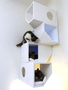 8.) These kitty shelves.
