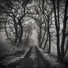 Foggy Forestry Black & Whites.