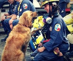The last living search and rescue dog from 15 year old Golden Retriever, Bretagne and her owner/ handler, Denise Corliss. Perros Golden Retriever, Old Golden Retriever, Retriever Dog, Search And Rescue Dogs, Dog Search, Funny Animals, Cute Animals, Amor Animal, Animal Pics