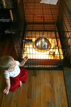 Dog Kennel Brooder - Great post with tips on what you need to get started