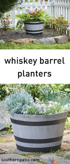 House Plant Maintenance Tips Our Birchwood Whiskey Barrel Offers Dozens Of Looks That Are Perfect For Whatever Your Mood Desires Outdoor Planters, Concrete Planters, Pallet Planters, Planter Ideas, Container Plants, Container Gardening, Vegetable Gardening, Amazing Gardens, Beautiful Gardens