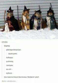Dogwarts houses. Hufflepup, Ravenpaw, Gryffindog, & Slobberin.