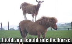 See! I told you I can ride a horse.