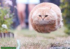 funny flying cat - Buscar con Google