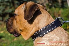 Studded Design #Leather #Dog #Collar - $39.90 | www.fordogtrainers.com