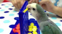 Biko the lovebird doing tricks! Pets 3, Song Artists, Eat Fruit, Brain Breaks, Love Birds, Parrots, Pepper, Sweet Ideas, Chakras