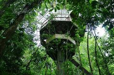 Probably you could easily live in one of these amazing tree houses. How cool! Which one of these do you like best?