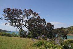Waiheke Island, Auckland, New Zealand