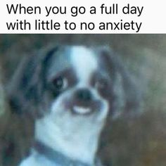 """15 Anti-Wholesome Memes For Anyone Who's Sick Of The Holiday Cheer - Funny memes that """"GET IT"""" and want you to too. Get the latest funniest memes and keep up what is going on in the meme-o-sphere. Funny Animal Jokes, Funny Dog Memes, Cute Memes, Really Funny Memes, Cute Funny Animals, Stupid Funny Memes, Funny Relatable Memes, Funny Cute, Funny Dogs"""