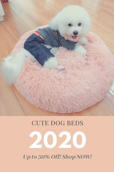Check out our cute dog bed selection for the very best in unique or custom, handmade pieces from our pet supplies shops. Tips for Training and Educating Do Lazy Dog Breeds, Fluffy Dog Breeds, Loyal Dog Breeds, Dog Breeds List, Fluffy Dogs, Dog Names Unique, Unique Dog Breeds, Popular Dog Breeds, Cute Dog Beds
