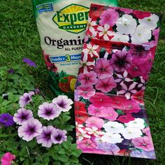 what you'll need to make a flowering plant bag container garden