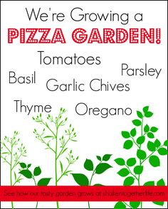 Learn how to Grow a Pizza Garden with your Family plus 6 Tips for a Family Garden. By Shaken Together