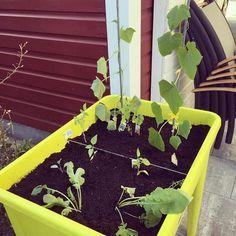 Veggie Style  #hochbeet #veggies #elho #letitgrow   Content shared via elho Inspiration Gallery