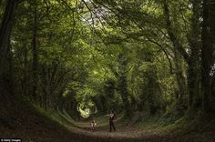 Xanthe Lewis-Hall, two, and her mother walk through a tunnel of trees on an old Roman road in Halnaker,West Sussex, today