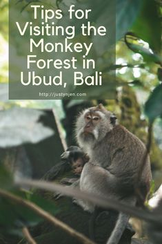 Get the best tips for visiting the monkey forest in Ubud, Bali!