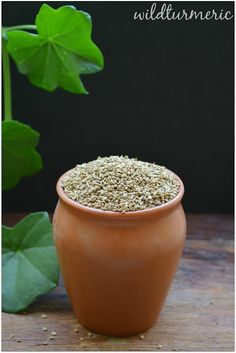 Wonderful Ajwain Seeds | Carom Seeds: This is one ingredient that I would highly recommend that you take it with you while you are traveling as it treats all digestion related problems, respiratory and skin problems....