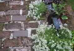 Alyssum and brick