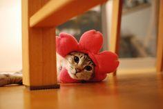 Was ein süßes Blümchen... ;-)  Ne kadar güzel cicek... ;-)  What a cute flower... ;-)