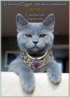 Nell'antico egitto i gatti erano considerati Déi. Non l'hanno dimenticato.