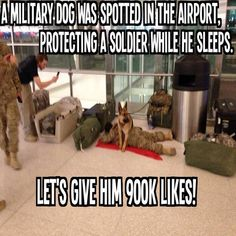 Soldiers are ALL of those military members on the front line. Dogs have saved a great many soldiers and deserve the utmost respect that any civilian can provide. The highest respect that can be paid is to be known as a soldier.