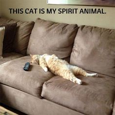 We Have Found Your Spirit Animal Memes) - World's largest collection of cat memes and other animals Funny Cat Memes, Funny Cats, Funny Animals, Cute Animals, Cats Humor, Fun Funny, Funny Humor, Funny Cat Pics, Funniest Animals
