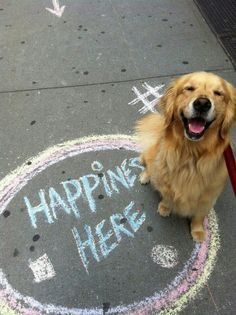 Isn't it funny how animals have no point of view about being unhappy? They just BE.