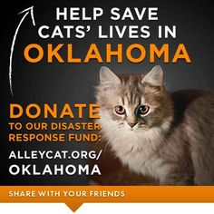 Cat food, litter, veterinary supplies. Help us get the critical resources needed to help cats and their caregivers in Oklahoma.     Please donate TODAY: http://www.alleycat.org/Oklahoma