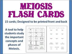 Mitosis and Meiosis Worksheet   GENETICS   Pinterest   Mitosis and ...
