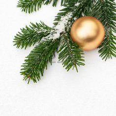Tannenzweig mit Pulverschnee und goldene Weihnachtskugel