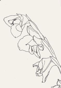 hochu-dodomu: Gladiolus
