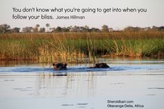 """""""You don't know what you're going to get into when you follow your bliss."""" :) <3 James Hillman, PhD"""