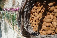"""Sicily   Avola almond """"mandorle pizzute"""" typical of the Val di Noto (Siracusa)"""