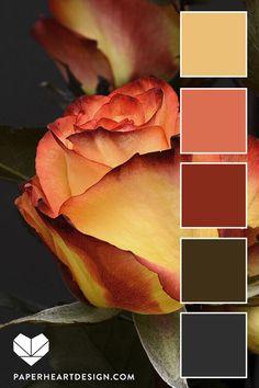 Yellow Orange Roses Color Palette – Color Inspiration – do pallet Color Schemes Colour Palettes, Colour Pallette, Color Palate, Color Combos, Orange Palette, Seeds Color Palettes, Room Color Schemes, Orange Roses, Orange Yellow