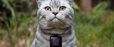 E se houvesse uma espécie de Instagram para gatos? A proposta é da Whiskas que criou o Catstacam, um dispositivo wearable colocado no gato. Trata-se de uma câmara de baixa qualidade, capaz de tirar até seis …