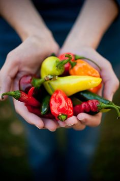 Handful of peppers