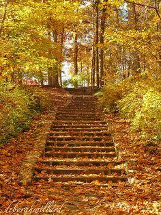 The long steps at Miller Park by DebDubya, via Flickr