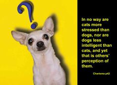 Cats are seen as more stressed than dogs. Dogs are viewed as less intelligent than cats.    From Michael Grinder's book: Charisma  Avoid the trap of either being stressed but intelligent or relaxed but less intelligent. Pause more. What are three appropriate times to practice pausing in the next two days?