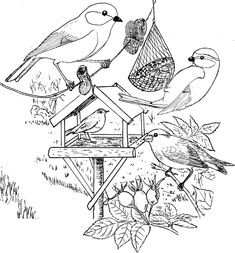 bird in winter coloring - Hľadať Googlom Bird Coloring Pages, Doodle Coloring, Coloring Books, Bullet Journal 2, Tree Day, Fallen Book, Parchment Craft, Zen Doodle, Winter Theme