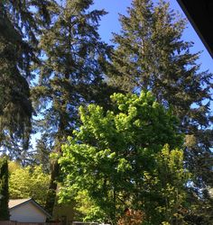 A rare sunshiny day  and I love to sit and stare at the beauty God has created in the Pacific NW.